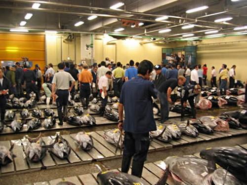 subasta atunes en Tsukiji