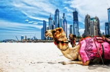 DUBAI: VISITAS MEDIO DÍA