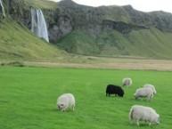 Hvolsvöllur - Reykjavík