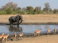 SWAZILANDIA – KRUGER