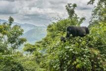 ENTEBBE – BWINDI NP