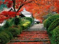 VUELO CIUDAD DE ORIGEN – TOKYO