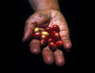 DÍA 29/12: EXCURSIÓN AL PARQUE NACIONAL LOS HAITISES  (Desayuno y comida)