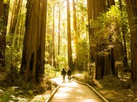 SAN FRANCISCO – MARIPOSA GROVE- YOSEMITE N.P