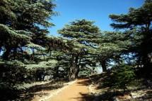 BEIRUT – DEIR EL QAMAR – EXCURSION DE BARUK A MAASER CHOUF