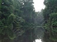 PN TORTUGUERO: NAVEGACIÓN POR LOS CANALES – CAMINATA AVISTAMIENTO FAUNA (Pensión completa)