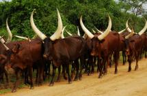 BWINDI NP – ENTEBBE