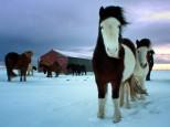 Escapada a Islandia y auroras boreales - S. Santa 2019