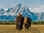 Las Rocky Mountains y Yellowstone: Fly & drive inédito Costa Oeste USA