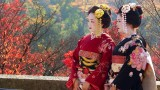 Japon: Sakura y festival Hanami- Especial Semana Santa