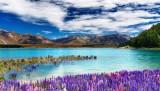 Viaje a Nueva Zelanda con Guía: fiordos, volcanes y glaciares