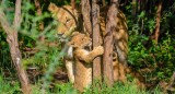 Uganda: Safari Kiboko