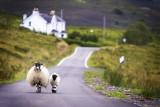 Escocia grupo reducido: recorriendo las Orcadas y Staffa
