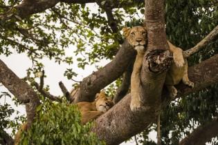 Uganda: Safari Twinga