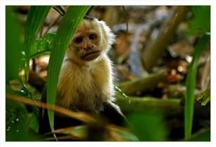 Costa Rica: Escapada al trópico