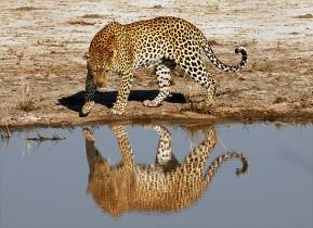 Botswana especial Semana Santa, desierto y agua