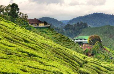 Cameron Highlands, Malaysia_2