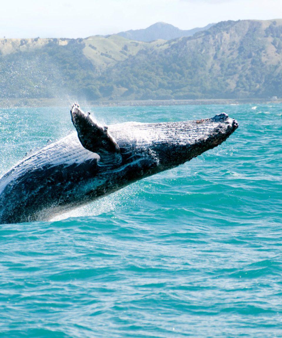 viajar-a-samana-republica-dominicana-ballenas