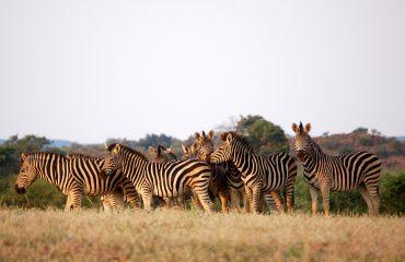 viaje-a-botswana-safari