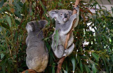 viaje-a-brisbane-melbourne-australia