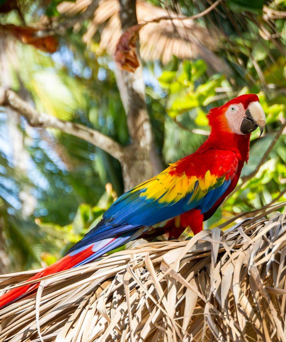 viaje-a-costa-rica-tropico