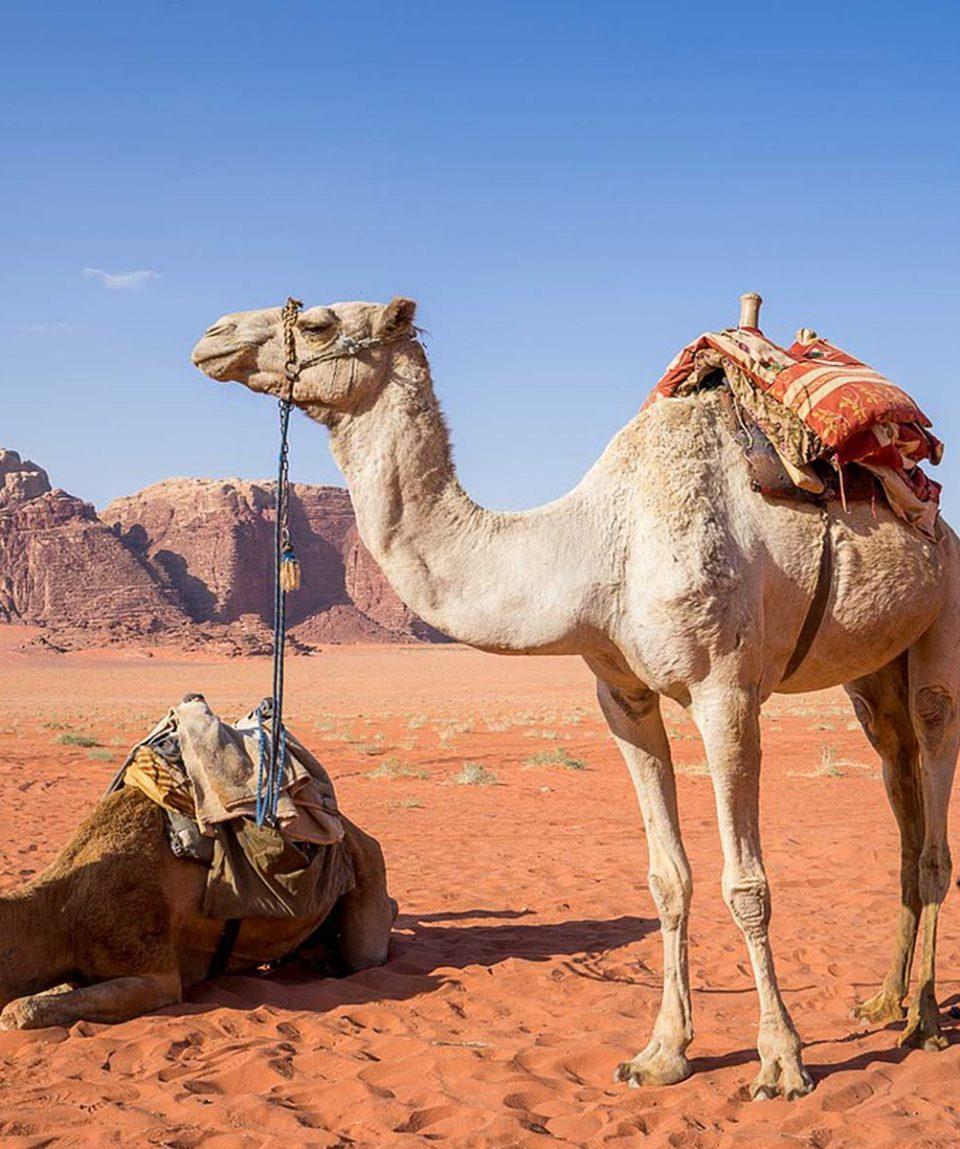 viaje-a-jordania-en-grupo