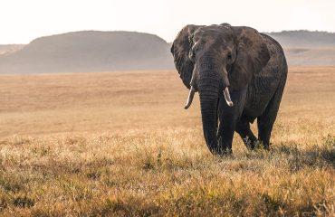 viaje-a-kenia-apasionante