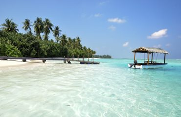 viaje-a-las-maldivas-palmeras
