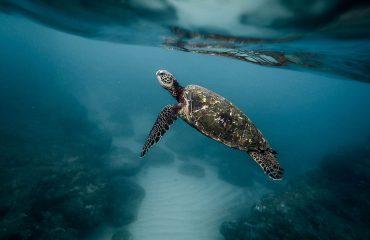 viaje-a-seychelles-tortuga