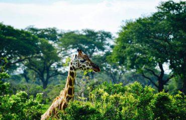 viaje-a-uganda-safari