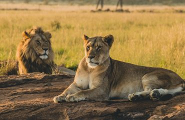 viaje-tanzania-kenia-safari