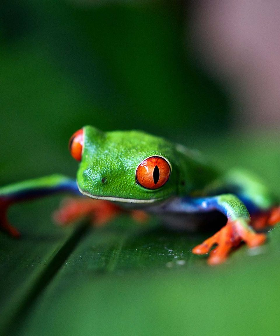 Costa Rica: Extensión Corcovado