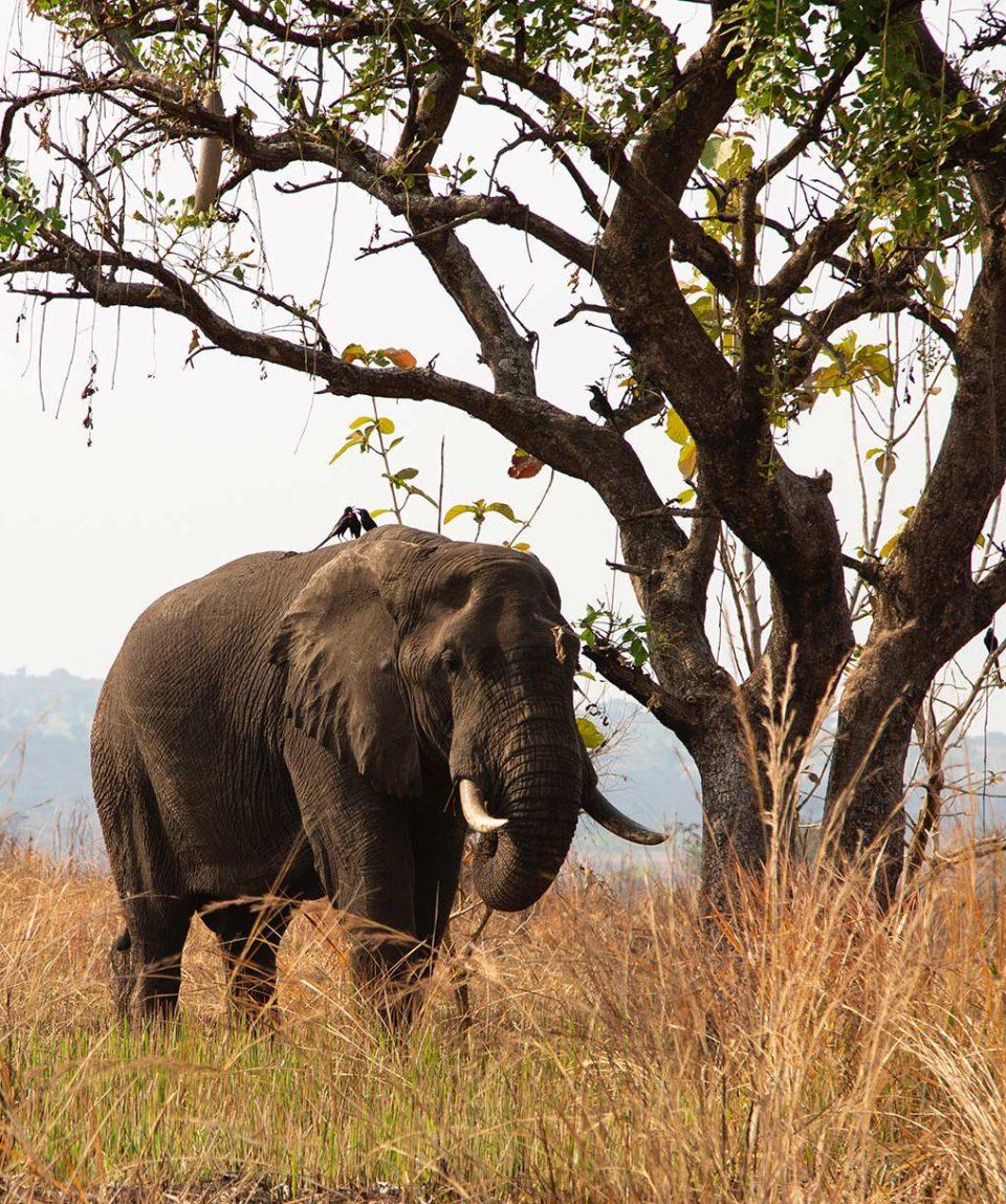 Safari por Uganda
