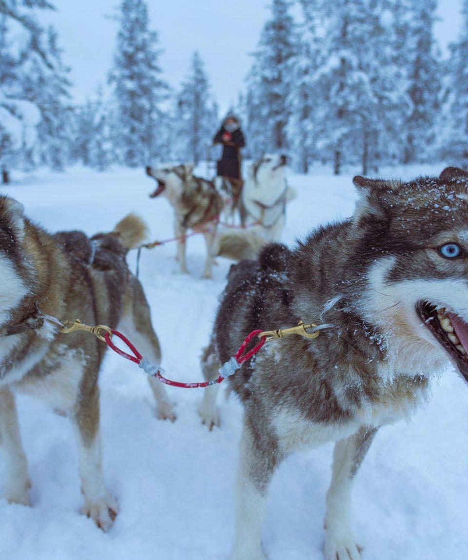 Noruega: Lofoten, auroras boreales y trineos de perros en Abisko