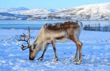 Viaje a Noruega: Lofoten, Tromso y ballenas