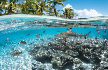 sejours-iles-tuamotu-fakarava-paradis-des-plongeurs-requins-e-tahiti-travel